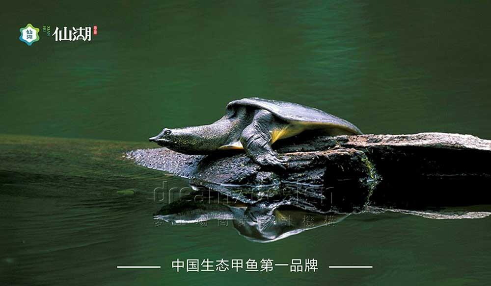 仙湖·有机甲鱼